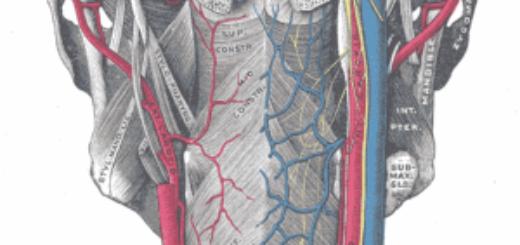 холестериновые бляшки в сонной артерии